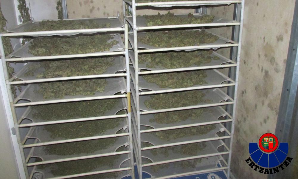 galdakao marihuana konfiskatuta 2018 industraialdea argazkia ertzaintza 1