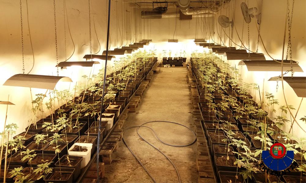 galdakao marihuana konfiskatuta 2018 industraialdea argazkia ertzaintza